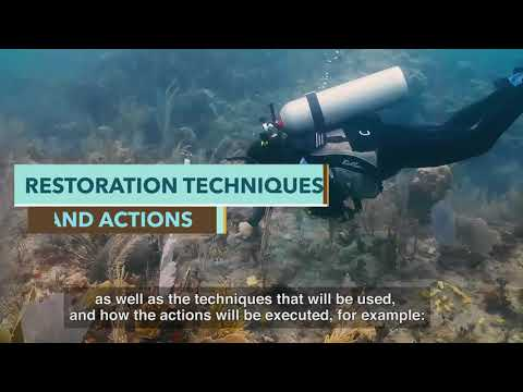 Introduction to Reef Restoration