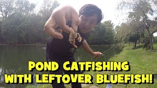 TINY POND CATFISHING Using Bluefish LEFTOVERS!!! (Exciting!) (Give-Away Included)
