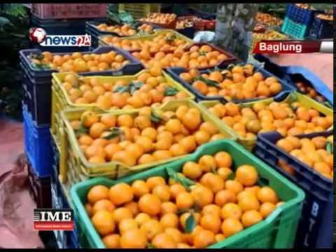 बाग्लुङका कृषकहरुद्वारा ९ करोड रुपैँया भन्दा बढीको सुन्तला निर्यात - BUSINESS NEWS