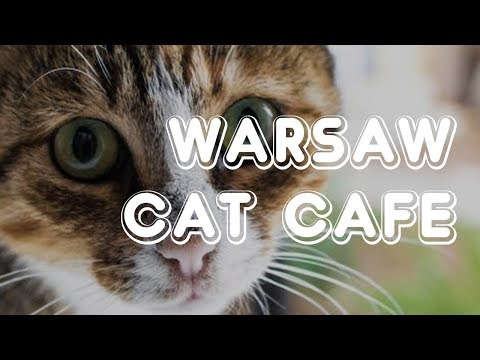 Warsaw Cat Cafe - Miau Cafe