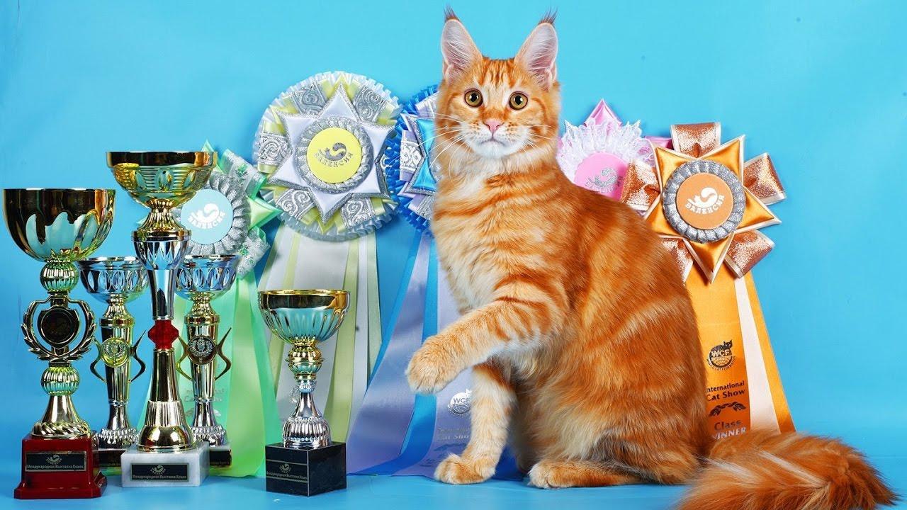 Объявления о продаже кошек и котят в туле на avito.