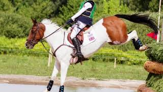 Little Indian Feather - PONY EUROPEANS 2017: HUNGARY