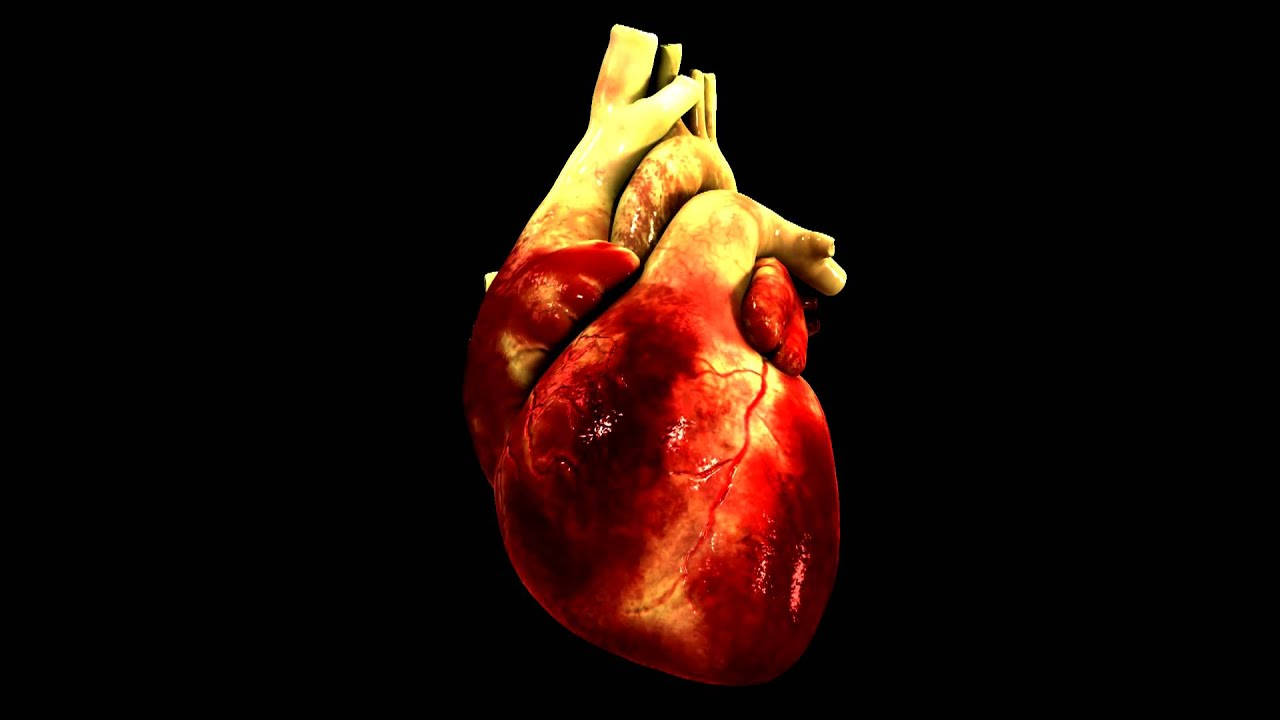 Animated human heart - photo#35