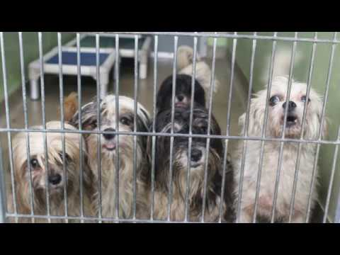 Fairfax County Animal Shelter Commercial (Ad) School Project