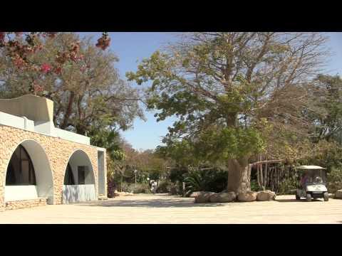 Ein Bokek - Kibbutz Ein Gedi - David