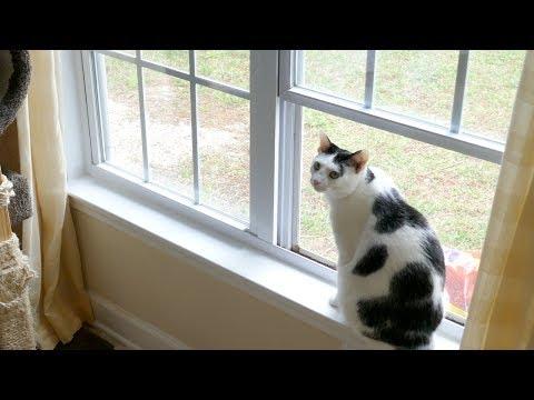 Bird-Watching App •4.19.17