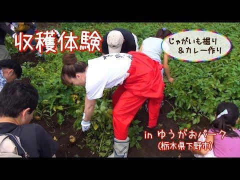 栃木県下野市で農業体験! じゃがいも堀りをしてみよう!