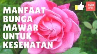 Manfaat bunga mawar untuk kesehatan Mp3