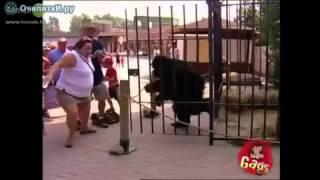 Розыгрыши с гориллой