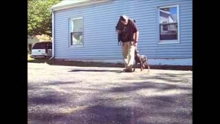 Stubborn Doberman - Ohio Dog Training - Ohio Master Dog Trainer Teaching