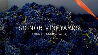 Signor Vineyards - Tannat Harvest 2021
