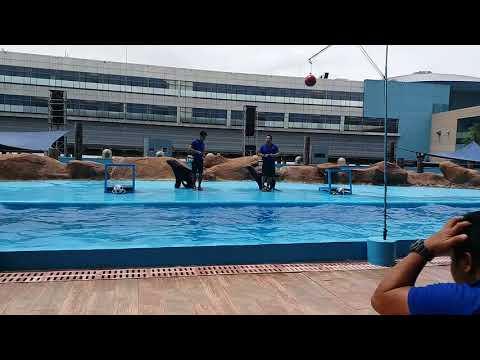Dolphin Show Part 2 at Manila Ocean Park