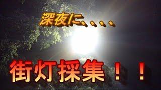 仕事中長野県の某所にて街灯採集をしてきました。