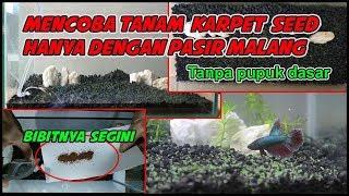 Tanam Karpet Seed Tanpa Pupuk Dasar - Time Lapse Aquascape