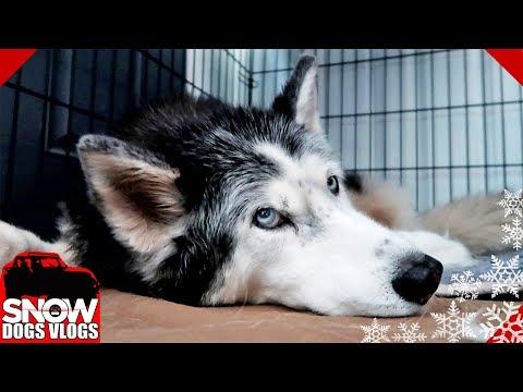 Oakley's Last Vlog