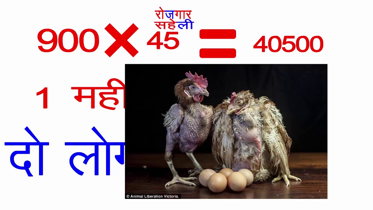 2018How to Starts Latest Broiler Poultry Chicken Simple very easy Method Marketing bussiness 2018