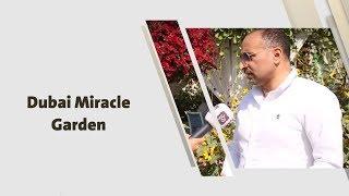 أمل القيمري - Dubai Miracle Garden