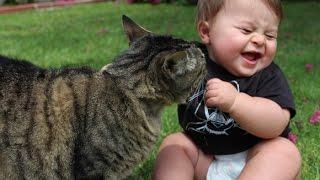 Приколы кошки с детьми. Подборка улетных приколов кошек с детьми 2015