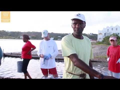 A look at Anguilla's salt picking history