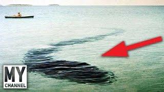 Dünyanın En Gizemli 5 Deniz Yaratığı