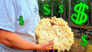 Can you actually make money foraging for wild mushrooms?