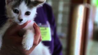 Washington Animal Rescue League Hd