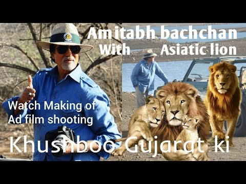 Watch Bollywood superstar Amitabh bachchan's Encounter with Asiatic lion in Gir at film shooting