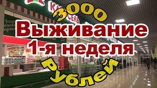 Улей за 700 рублей