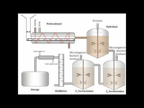 Process of Fermentation