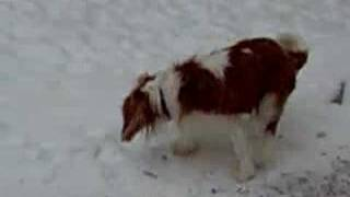 Snow Dogs:  Atticus And Chloe In The Wisconsin Snow