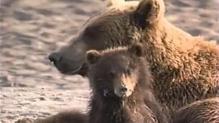 El Gran Oso de Siberia - Discovery Channel Video