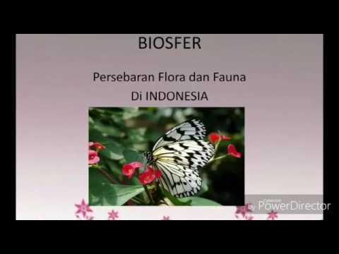 Persebaran flora dan fauna di indonesia Xl ips 2 suci shindy #smaywkabandung
