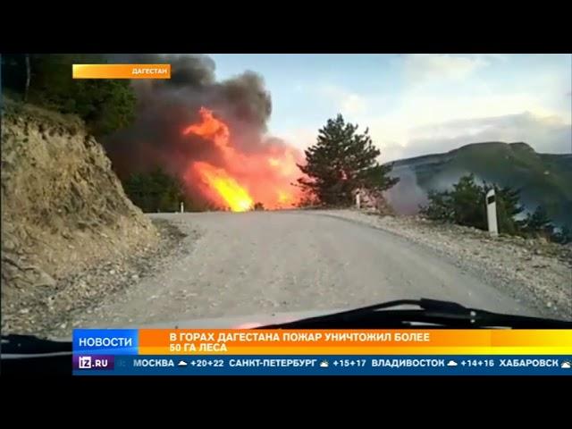 В горах Дагестана пожар уничтожил более 50 га леса