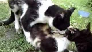 Kitty Love (Cat Sex)