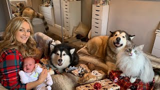 DOGS WITH A BABY | OUR FIRST FAMILY CHRISTMAS