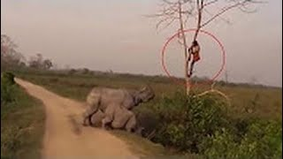 [Best Animal Fights]  [Wild Animal Attack]  When the animals attack humans .Rhino vs. human.