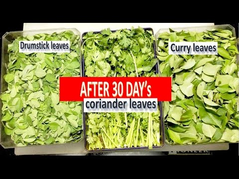 Kitchen Tips and Tricks-How to Store Green Leaves Minimu One Month