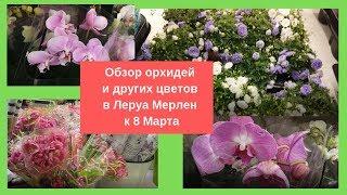 Обзор орхидей и других живых цветов в Леруа Мерлен к 8 Марта ????????????