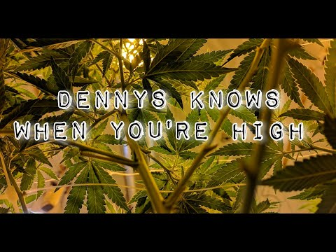 Dennys Knows When You're High 7-23-2021
