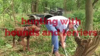 Hunting with hounds and terriers part 2.