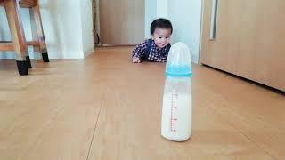 ミルクにタッチしそうでなかなかしない。