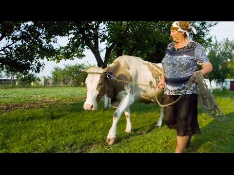 Milk Matters: Opening New Markets for Ukrainian Dairy Producers