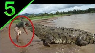 [Best Animal Fights]  [Wild Animal Attack]  5 Most Shocking Animal Attacks On Humans Caught on Tape