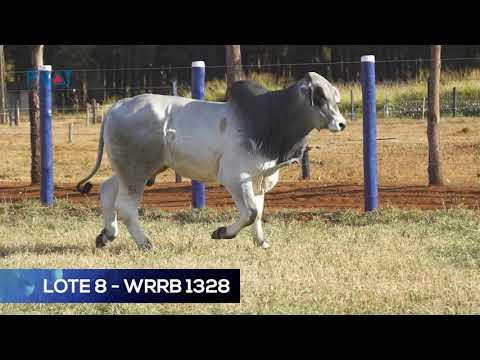 LOTE 8 - WRRB 1328 - BRAHMAN
