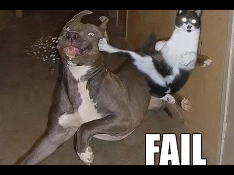 Dogs Who Fail At Being Dogs – Dogs Compilation Collection