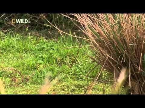 Wild Japan - National Geographic - Nature Documentary