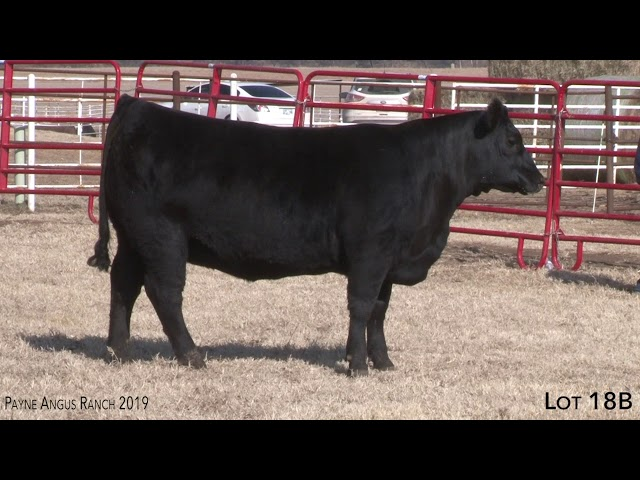 Payne Angus Ranch Lot 18B