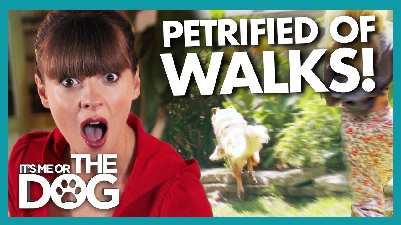 Dog 'Petrified' of Walks Gets EVEN WORSE When He Overcomes His Fear! |  It's Me or The Dog