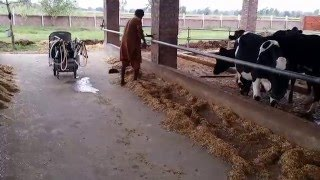 Raj Bros Dairy farm Chanderkey Rajpootan Narowal Pakistan