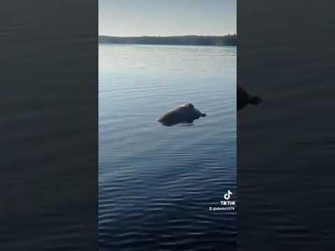 Нашли мертвого тюленя на Белом море.